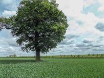 幽静结构树 免版税库存图片
