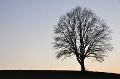 幽静结构树 库存照片