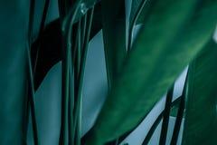 广告卡片或邀请的空白 绿皮书卡片笔记 库存照片