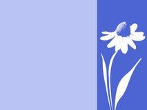 广告横幅标记的雏菊明信片 免版税库存照片