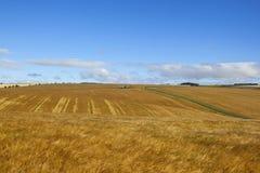 广泛的金黄大麦庄稼 库存照片