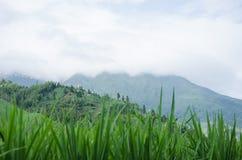 广西省中国人龙脊大阳台风景区龙胜县  图库摄影