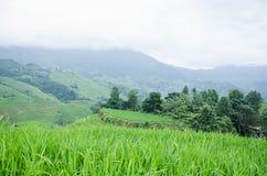 广西省中国人龙脊大阳台风景区龙胜县  免版税库存照片