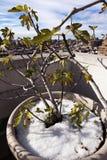 有地平线的冬天厂在西部村庄曼哈顿纽约 库存图片