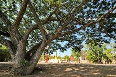 广角看法,在Wat Chedi皮带前面金黄塔的树  库存照片