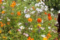 广角看看五颜六色的花 库存照片