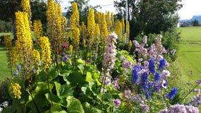 庄严五颜六色的花在与美国钞票的夏天阳光下在背景中吃草 库存照片
