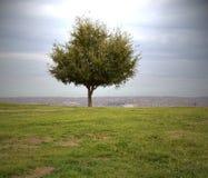 庄严小的树沿峭壁` s边缘单独站立 免版税库存照片