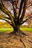 庄严结构树 库存照片