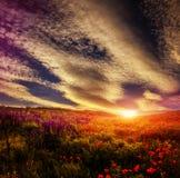 庄严风景,在鸦片领域的五颜六色的天空,美妙的日落 免版税库存图片
