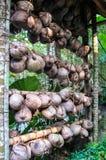 从庄中国少数民族村庄的椰子显示 免版税库存照片