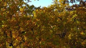 庄园和明亮的秋天森林的鸟瞰图 股票录像