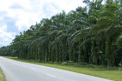庄园油棕榈树 免版税库存照片