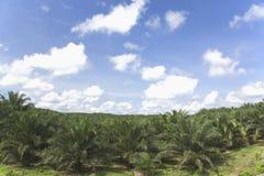 庄园油棕榈树 图库摄影