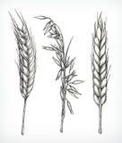 庄稼、麦子和燕麦剪影 皇族释放例证
