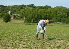 庄稼供以人员浇灌 库存照片