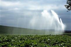 庄稼喷洒的水 库存图片