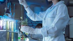 庄稼女性下降的化学制品在植物中 影视素材