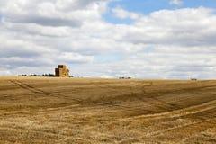庄稼成熟麦子 库存图片
