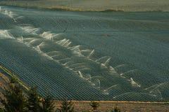 庄稼灌溉俄勒冈 图库摄影