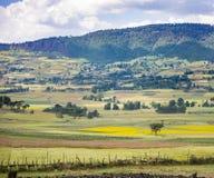 庄稼的五颜六色的领域在埃塞俄比亚 免版税图库摄影