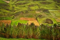 庄稼种植园在里奥班巴,厄瓜多尔 免版税图库摄影