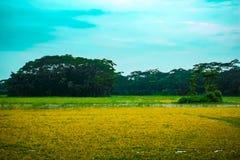庄稼领域和天空风景  免版税库存照片