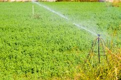 庄稼领域的自动灌溉 免版税库存图片