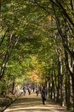 闻庆市,韩国- 2014年10月14日:mungyeongsaejae舞步看法  免版税库存图片