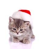 庆祝圣诞节的小的猫 免版税库存图片