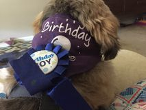 庆祝我的儿子生日 免版税图库摄影