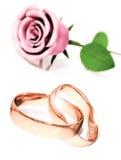 庆祝极大的玫瑰 库存例证