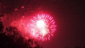 庆祝的明亮的五颜六色的烟花显示 免版税库存图片