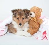 床时间小狗 库存图片