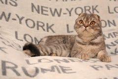 床罩的猫旅客 库存照片