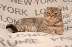 床罩的猫旅客 免版税库存照片