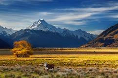 库克山,坎特伯雷,新西兰 免版税图库摄影