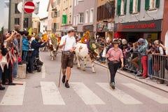 库夫施泰因/奥地利/提洛尔19 9月:在cattl的装饰的母牛 免版税库存图片