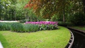 库肯霍夫,荷兰,荷兰;11/05/2019:惊人春天风景,有五颜六色的新鲜的郁金香的著名库肯霍夫庭院, 免版税图库摄影