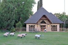 水库, Oliewenhuis博物馆在布隆方丹,南非 图库摄影