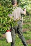 应用杀虫药肥料的花匠于他的果子灌木 免版税库存照片