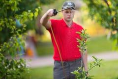 应用杀虫药肥料的花匠于他的果子灌木 库存照片