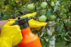 应用果子苹果的花匠杀虫肥料和防止受到真菌,蚜虫 免版税图库摄影