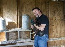 应用疗程的农夫于一只自由放养的鸡 免版税库存图片
