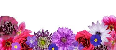 底层开花多种桃红色紫色红色行 免版税库存图片