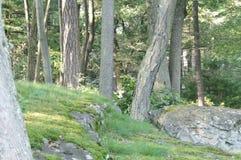 底层森林视图 免版税库存图片