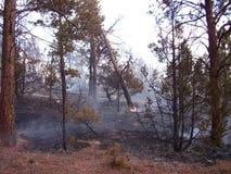 底层被烧的结构树 库存图片