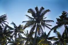 从底视图的棕榈树 库存图片