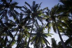 从底视图的棕榈树 库存照片