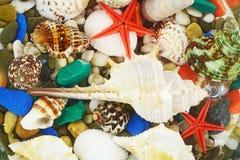 底部海扇壳种植海运海草 免版税库存图片